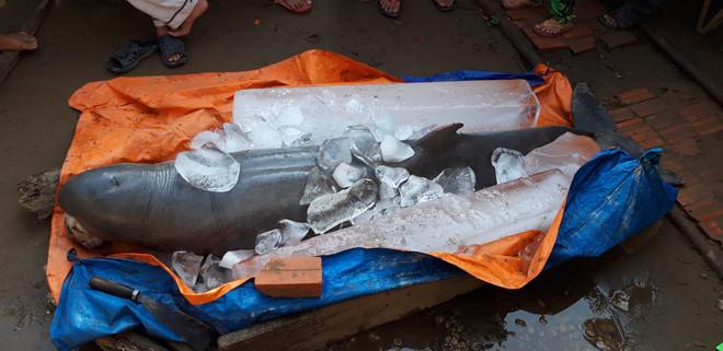 Ngư dân đòi 40 triệu mới giao xác cá heo nặng 150kg  - Ảnh 1