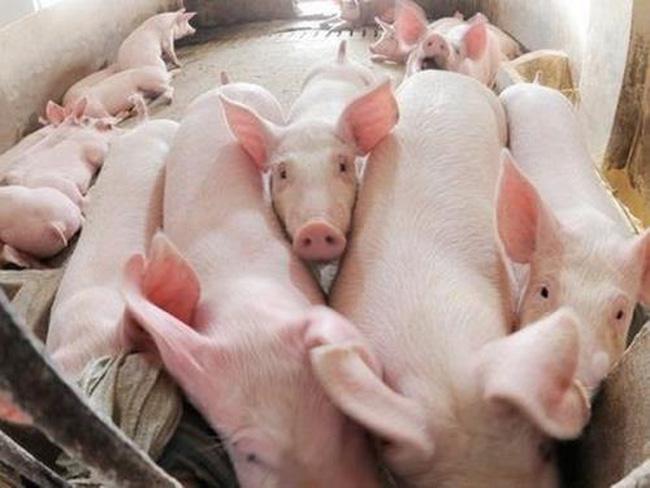 Tin tức kinh doanh mới nóng nhất hôm nay 31/5/2019: Đồng USD tăng mạnh, giá lợn lên cao  - Ảnh 2