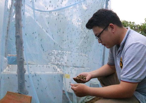 Chàng kỹ sư trẻ liều lĩnh về quê nuôi ruồi, thu nhập 80 triệu đồng/tháng - Ảnh 2