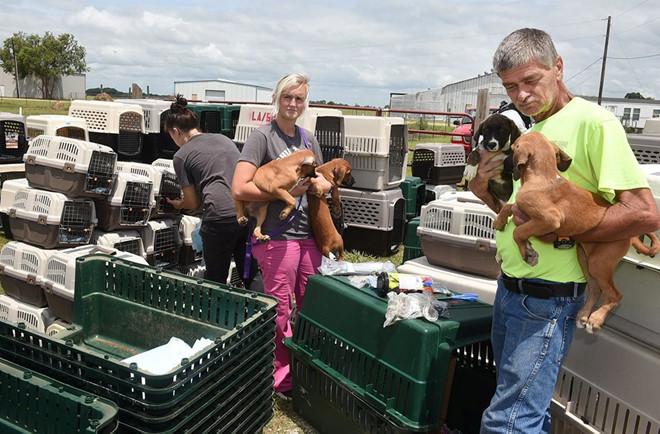 Tránh bão, chó mèo được sơ tán bằng máy bay  - Ảnh 1