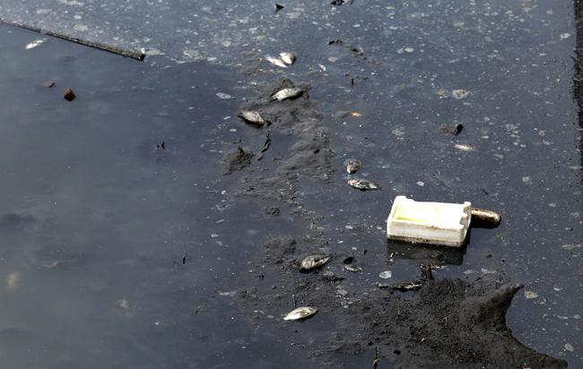 Nước sông Tô Lịch lại đen kịt, cá chết dày đặc  - Ảnh 5