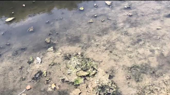 Nước sông Tô Lịch đã trong, nhìn thấy rõ đáy bùn đang phân hủy  - Ảnh 2