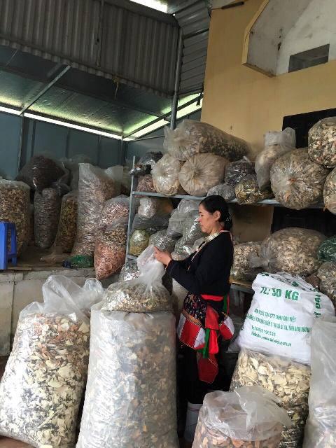 Lương y Triệu Thị Hòa nổi tiếng với bài thuốc nam dân tộc Dao chữa khỏi các bệnh xương khớp - Ảnh 1