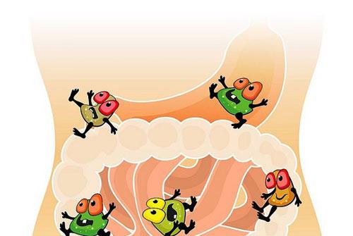 Cứ táo bón là dùng men vi sinh – có nên hay không? - Ảnh 2