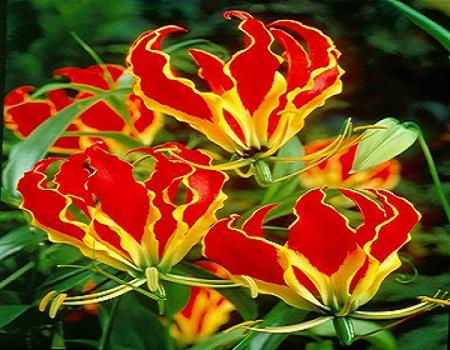"""Ngoắt nghẻo: Loài hoa đẹp trong """"hồ sơ thần chết"""" ở Việt Nam - Ảnh 1"""