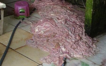15 tấn nội tạng thối chuẩn bị lên bàn nhậu bị thu giữ - Ảnh 1