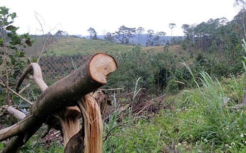 Để mất gần 50 ha rừng, chủ tịch xã bị kỷ luật cảnh cáo - Ảnh 1