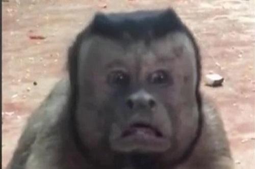 """Chú khỉ """"gây bão"""" với gương mặt hoang mang như """"mất sổ gạo"""" - Ảnh 3"""