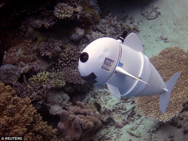 Chú cá robot có thể bơi ở độ sâu 15m mà không bị phát hiện  - Ảnh 1
