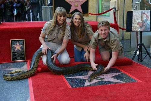 """""""Người săn cá sấu"""" quá cố bất ngờ được vinh danh trên Đại lộ Danh vọng Hollywood - Ảnh 2"""