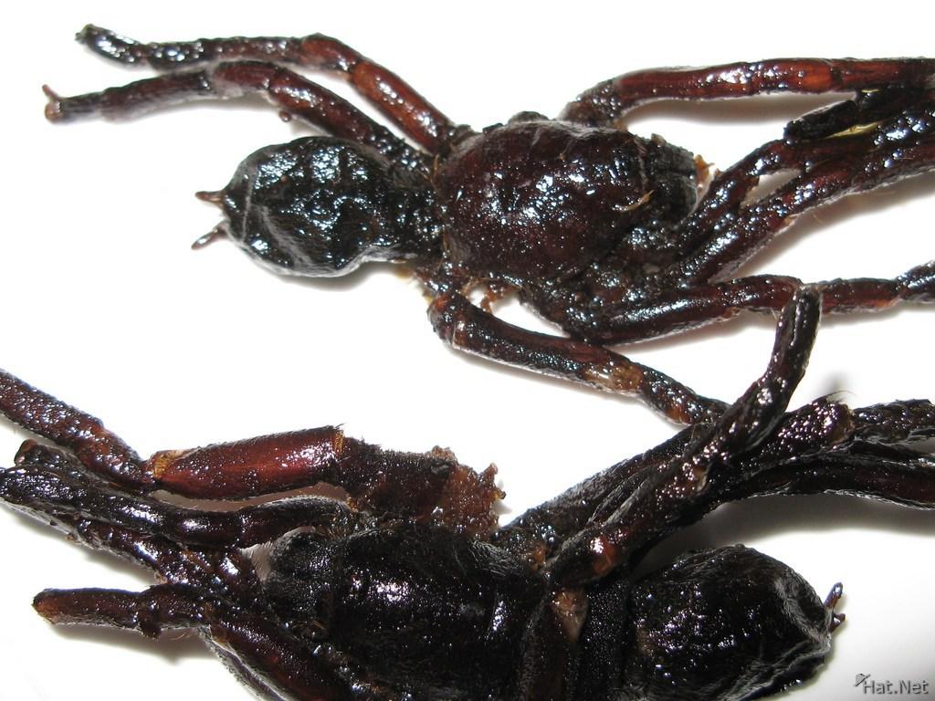 """""""Nhắm mắt"""" thưởng thức loài côn trùng đầy lông lá- đặc sản của người Campuchia - Ảnh 1"""