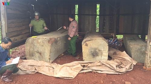Phát hiện gần 10m3 gỗ cất giấu trái phép tại nhà rẫy ở Đắk Nông - Ảnh 1