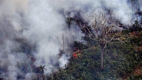 NASA: Rừng Amazon đang ngày càng khô cằn, hiểm họa cháy rừng tăng cao - Ảnh 1