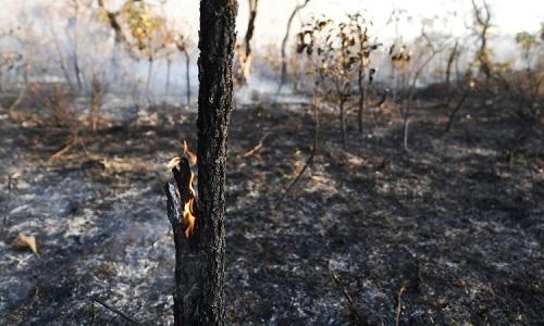 NASA: Rừng Amazon đang ngày càng khô cằn, hiểm họa cháy rừng tăng cao - Ảnh 2