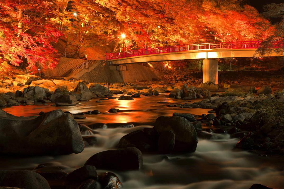 Trọn vẹn mùa thu Nhật Bản - Ảnh 3