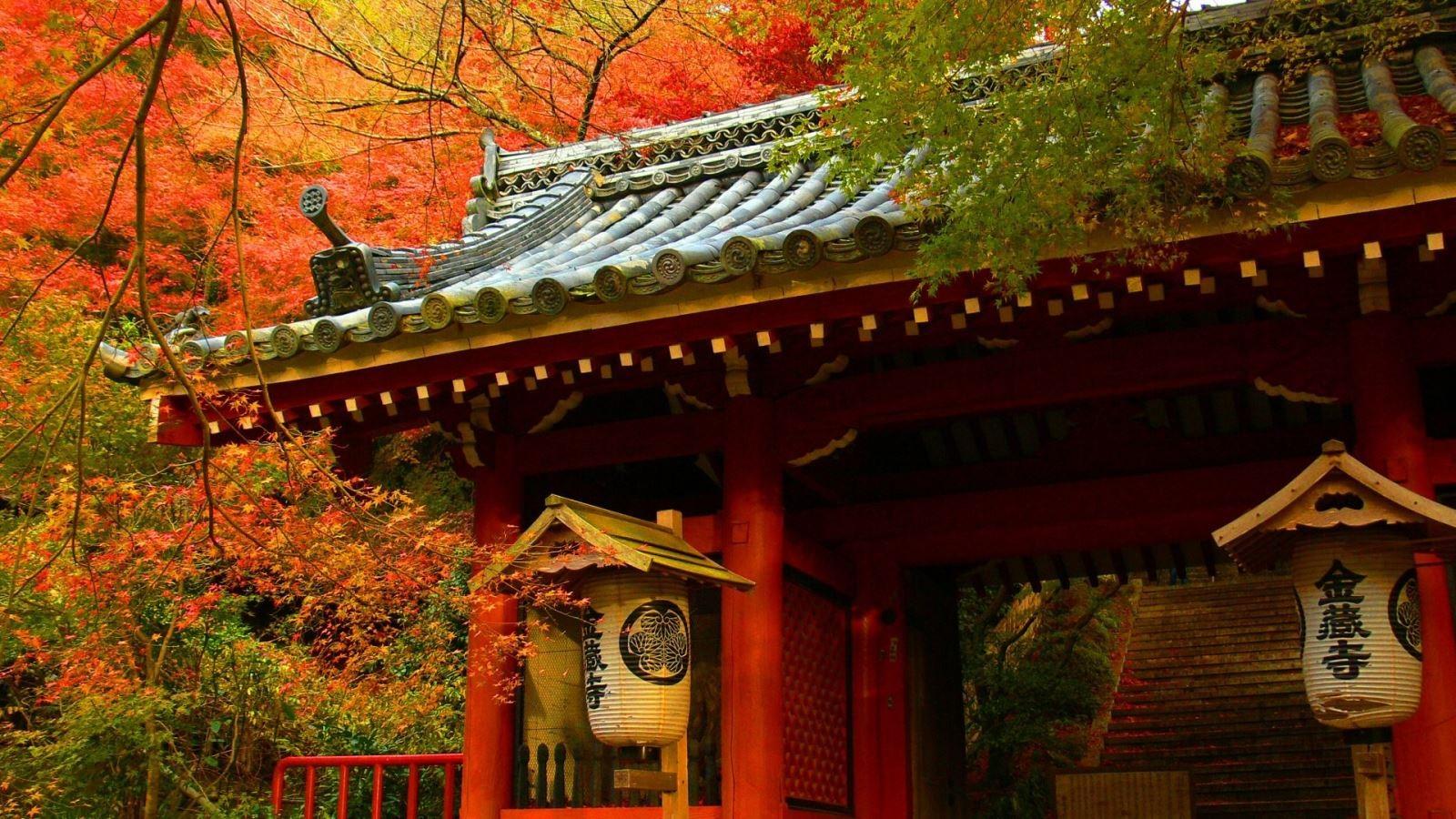 Trọn vẹn mùa thu Nhật Bản - Ảnh 2