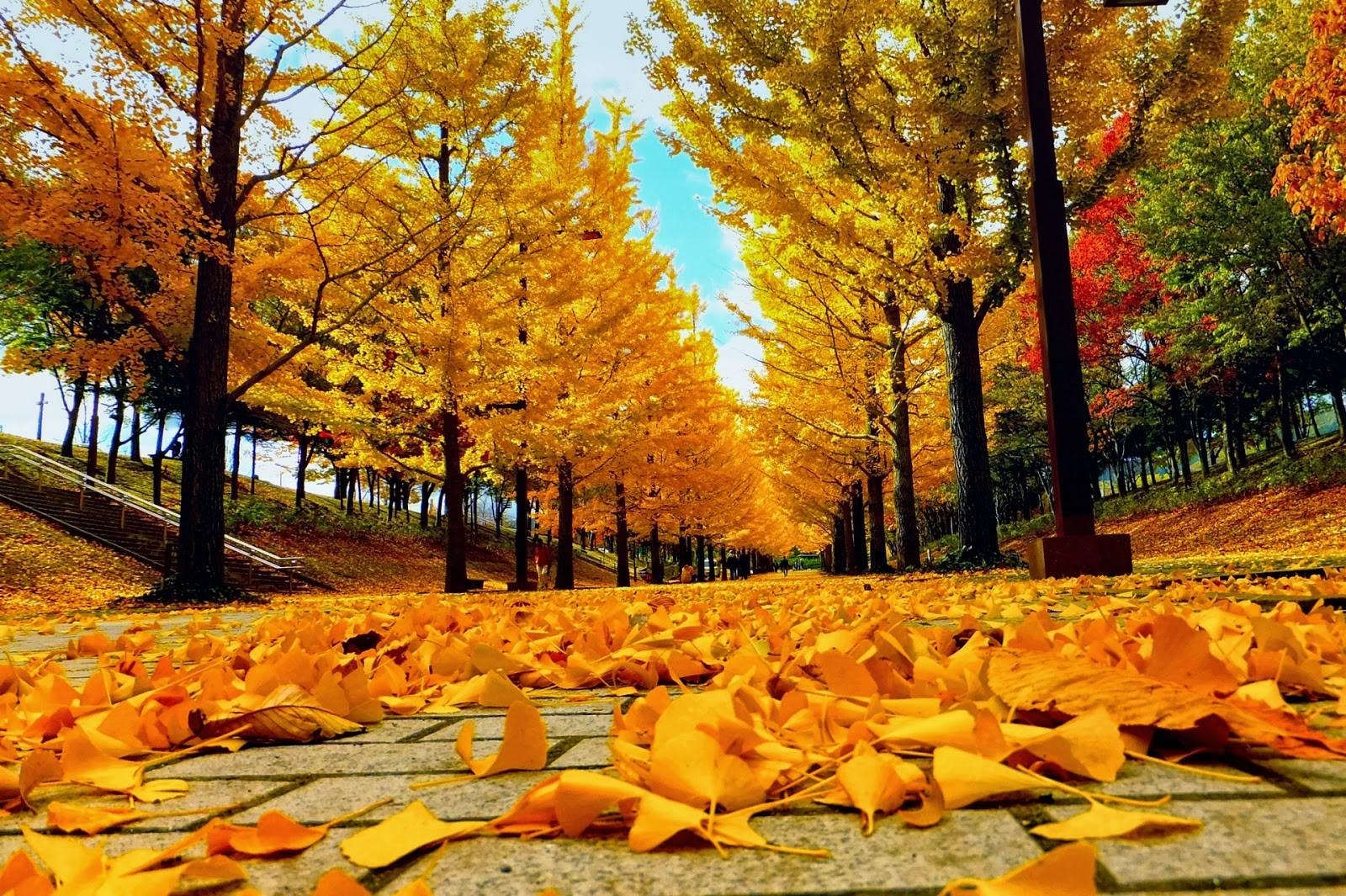 Trọn vẹn mùa thu Nhật Bản - Ảnh 4