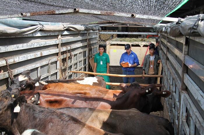 Vinamilk tiếp tục nhập hơn 200 cô bò hữu cơ về Việt Nam - Khẳng định vai trò tiên phong trong xu hướng organic cao cấp - Ảnh 6