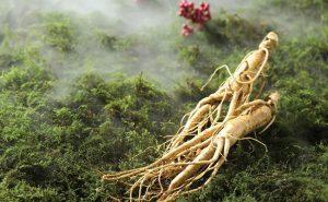 Tiết lộ 10 loại thảo dược Đông y giúp chữa bệnh tiểu đường được lưu truyền lại - Ảnh 2