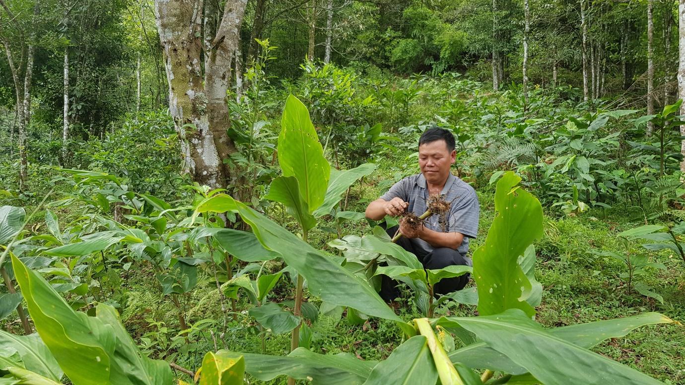 Xôn xao cây thuốc quý của người dân tộc Dao chữa khỏi bệnh viêm đại tràng - Ảnh 2