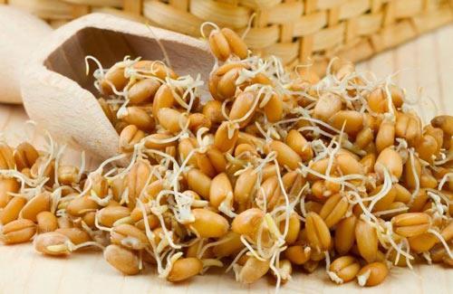 Có thể bạn chưa biết: Công dụng tuyệt vời của mầm lúa mạch - Ảnh 1