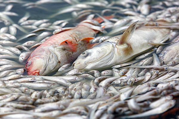 Tình trạng cá chết ở Hồ Tây chưa có dấu hiệu chấm dứt - Ảnh 3