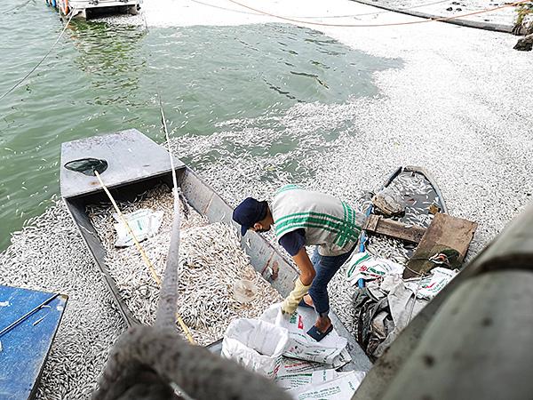 Tình trạng cá chết ở Hồ Tây chưa có dấu hiệu chấm dứt - Ảnh 8