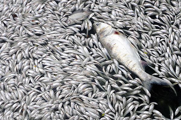 Tình trạng cá chết ở Hồ Tây chưa có dấu hiệu chấm dứt - Ảnh 2