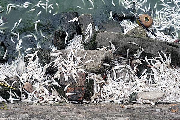Tình trạng cá chết ở Hồ Tây chưa có dấu hiệu chấm dứt - Ảnh 6