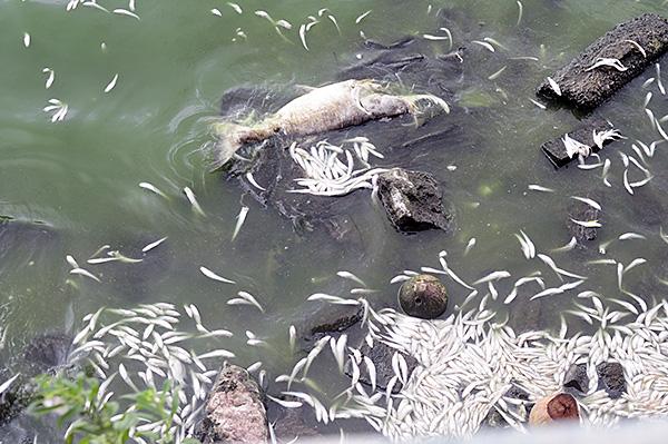 Tình trạng cá chết ở Hồ Tây chưa có dấu hiệu chấm dứt - Ảnh 5