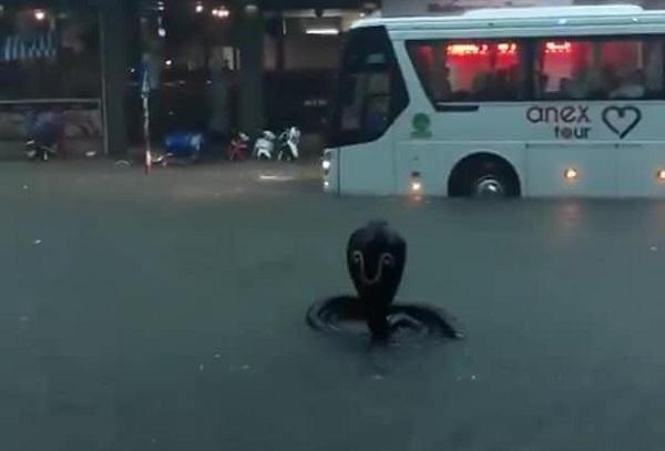"""""""Rắn hổ mang bành"""" bất ngờ xuất hiện trên phố Nha Trang khiến nhiều người kinh hãi - Ảnh 1"""