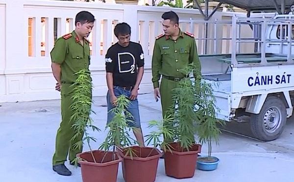Bắt nam thanh niên tự trồng cần sa tại nhà riêng để lấy lá sử dụng - Ảnh 1