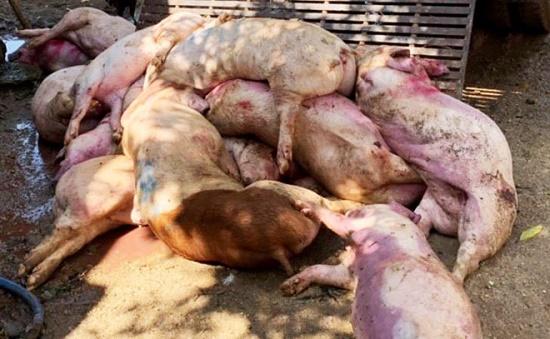 Kịp thời ngăn chặn 3,2 tấn thịt heo nhiễm bệnh chuẩn bị tuồn ra thị trường - Ảnh 1