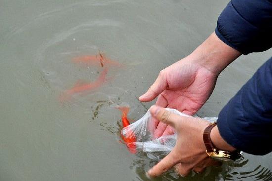 Tết ông Công, ông Táo: Chọn và thả cá chép như thế nào mới đúng phong tục dân gian - Ảnh 2