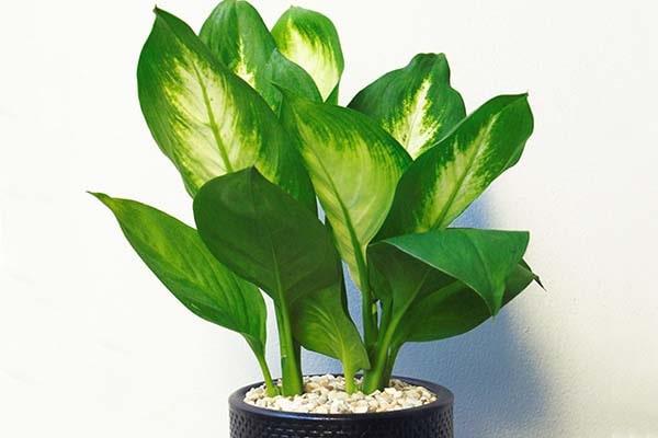 Muốn tài lộc gõ cửa đừng quên trồng 5 loại cây may mắn này trong nhà - Ảnh 5