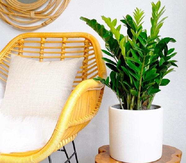 Muốn tài lộc gõ cửa đừng quên trồng 5 loại cây may mắn này trong nhà - Ảnh 1