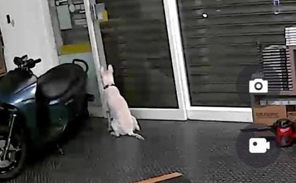 Lắp camera theo dõi thú cưng trong nhà, người đàn ông phát hiện sự thật rơi nước mắt - Ảnh 1