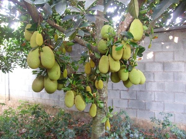 """Những loại cây tuyệt đối không nên trồng trước nhà, tránh """"khuynh gia bại sản"""" - Ảnh 2"""