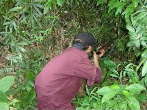 Núp trong bụi cây giả tiếng gà, nam thanh niên bị thợ săn bắn tử vong - Ảnh 1