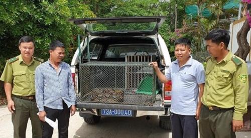 Cả gan bò vào chuồng bắt gà, trăn gấm nặng 20kg bị người dân bắt sống - Ảnh 1