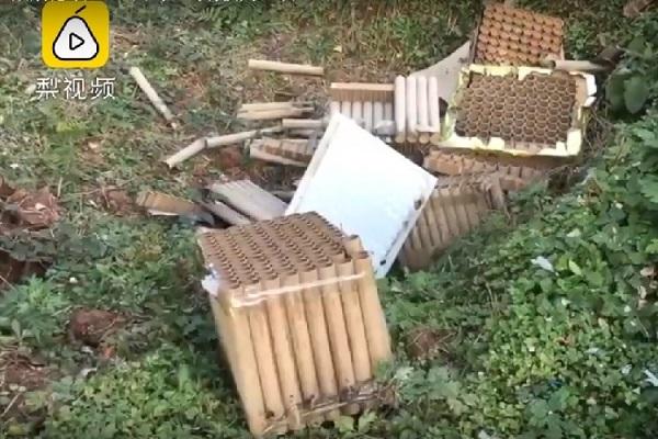 Gần 250 con gà đột nhiên lăn đùng ra chết nghi do tiếng pháo hoa - Ảnh 1