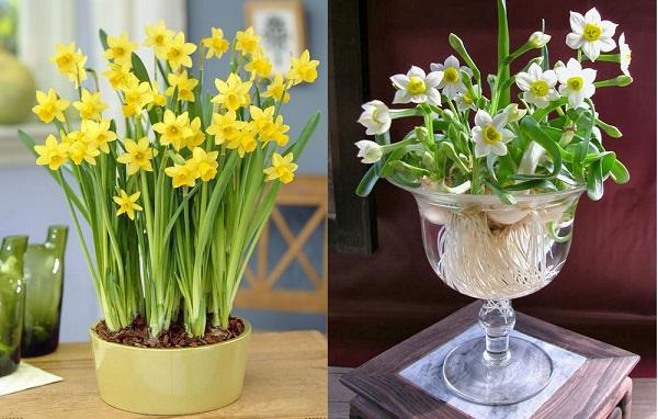 """Đặt 5 loại hoa này trong phòng khách, Thần Tài """"ưng bụng"""" rót tiền vào đầy két - Ảnh 1"""