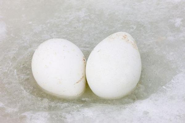 """""""Bóc trần"""" sự thật về quả trứng trong suốt với lòng đỏ màu cam khiến cộng đồng mạng kinh ngạc - Ảnh 3"""