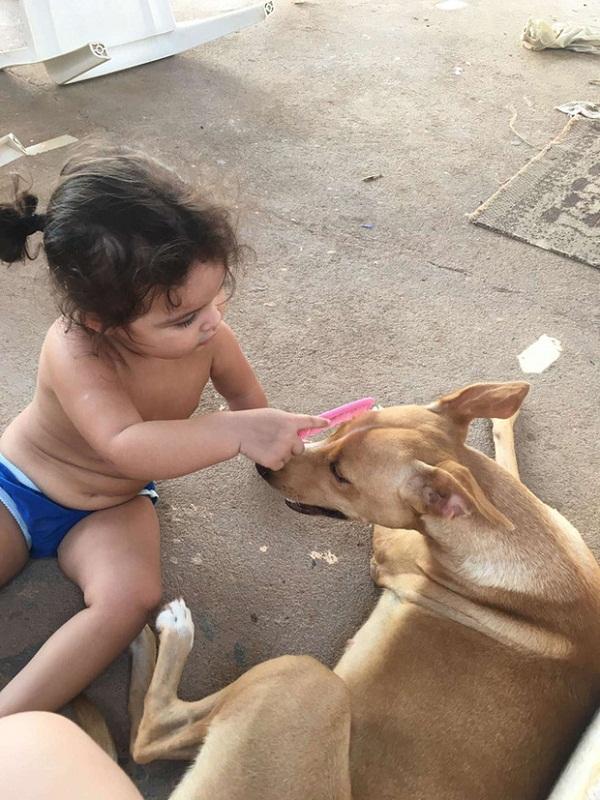 """Con gái đang chơi đùa với bầy chó bỗng im bặt, bố mẹ vội đi kiểm tra thì """"đứng hình"""" với cảnh tượng trước mắt - Ảnh 1"""