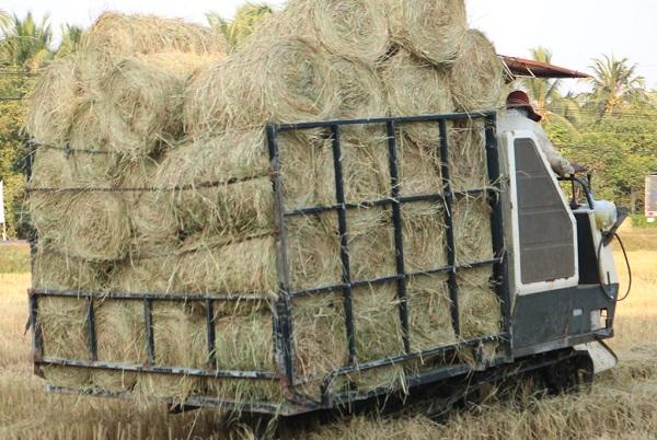 Nghề cuộn rơm ở miền Tây, nông dân thu nhập tiền triệu mỗi ngày - Ảnh 4