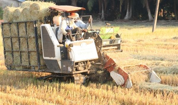 Nghề cuộn rơm ở miền Tây, nông dân thu nhập tiền triệu mỗi ngày - Ảnh 1