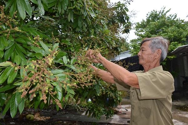 Hành trình chinh phục thiên nhiên của lão nông đưa trái ngọt về rừng U Minh - Ảnh 1