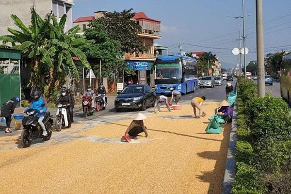 Người dân và CSGT cùng nhau giúp tài xế thu gom 10 tấn ngô rơi kín mặt cầu - Ảnh 1