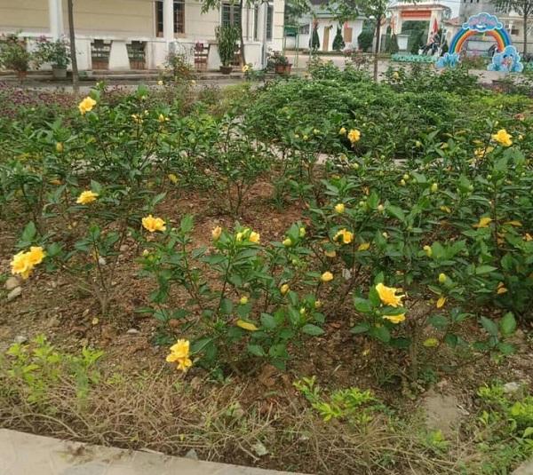 Muôn hoa khoe sắc trong khu cách ly công dân ở Hà Tĩnh - Ảnh 5