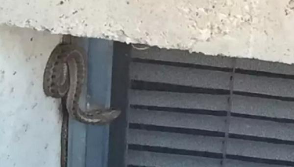 Dồn hết tiền mua ngôi nhà mơ ước, cặp vợ chồng tái mặt phát hiện hàng trăm con rắn dưới nền nhà - Ảnh 2
